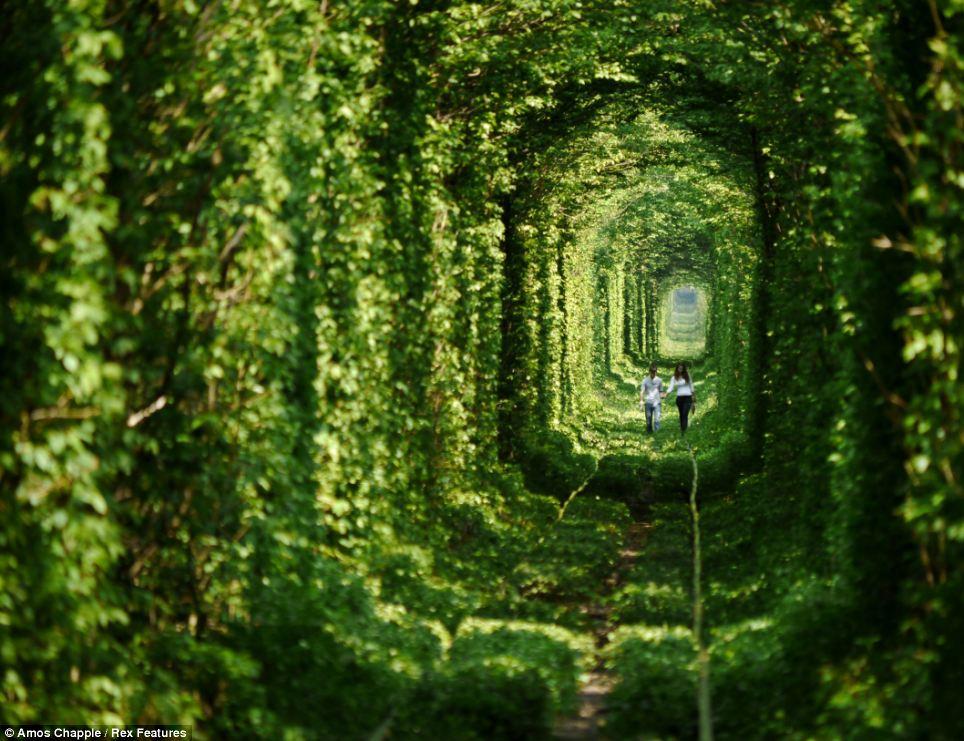 Anton Kozachuk, 18 y Nastya Guz, 16, caminar por el túnel del amor en Klevan, Ucrania