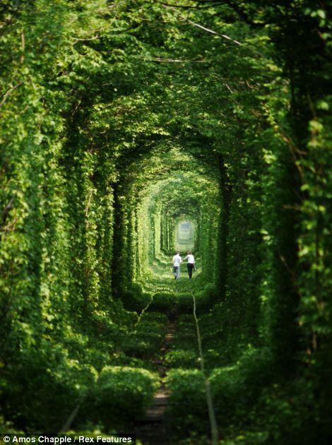"""Un tren que corre alrededor de tres veces al día a través de la etérea """"túnel"""" - la entrega de la madera a la fábrica"""