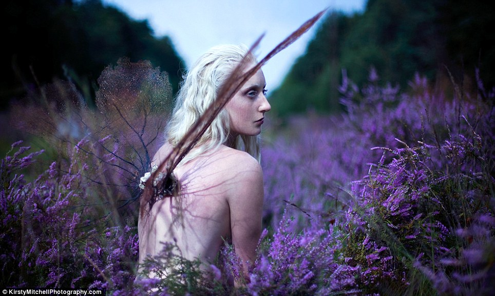 Euphaeidae: a winged fairy princess amidst a sea of lavender