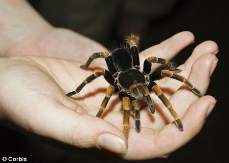 Image result for holding a tarantula