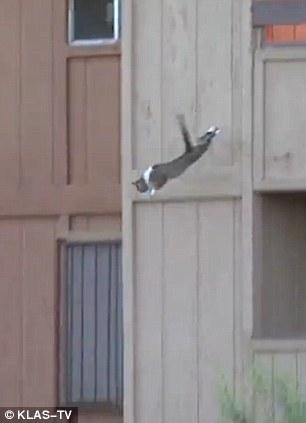 Kucing yang berani