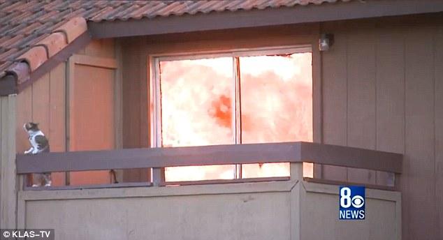 Mencoba untuk meraih atap, namun sepertinya terlalu tinggi dan panas karena api