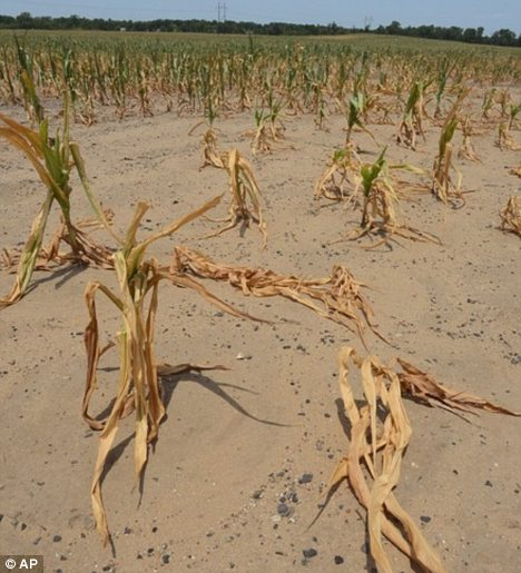 Drought: This year's record-breaking temperatures have damaged crops
