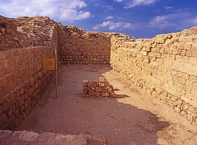 The remains of the old crusader fort of Apolonia. New investigations of the 13th century layers have thrown up hidden treasures