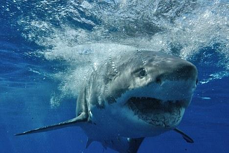 Nader Nazemi-Shark teeth-Flouride