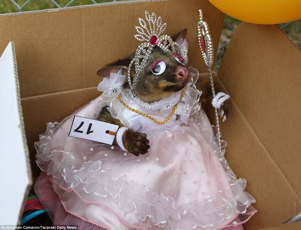 Prettiest possum? Not content with dressing this one in pink and elaborate jewels, one participant obviously thought it needed one more detail - a pair of stick-on eyes