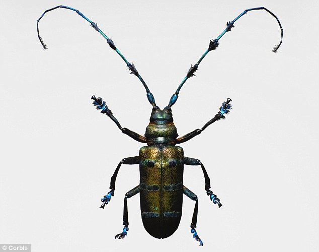 Nader Nazemi,Longhorned beetle,Pest,Satan,Scary,beautiful, pest,trees,Nader Nazemi