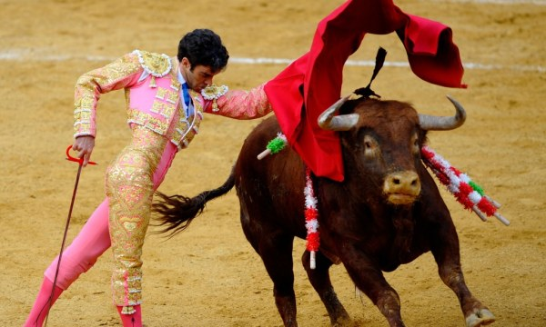 Bull fighting back on TV: Spain brings back live bull ...
