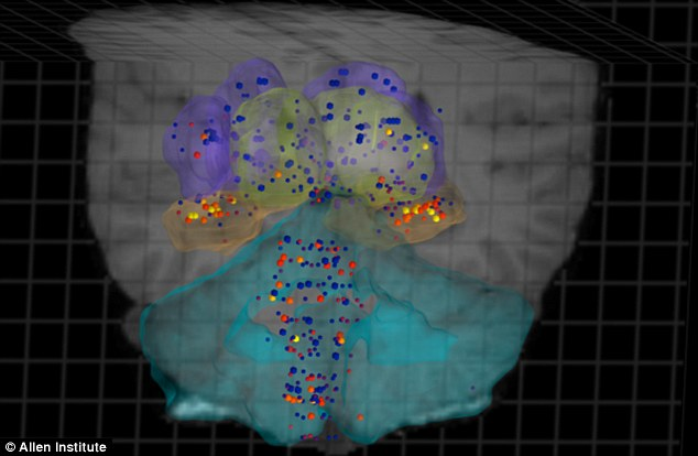 A 3D rendering by the Allen Institute shows genes within the internal structure of the brain: Blue dots show low gene activity, red dots show high activity