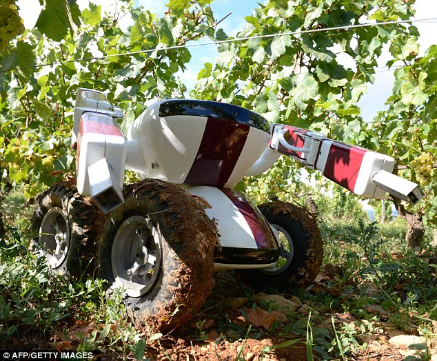 Faithful worker: The robot can work day and night to pick the vineyards