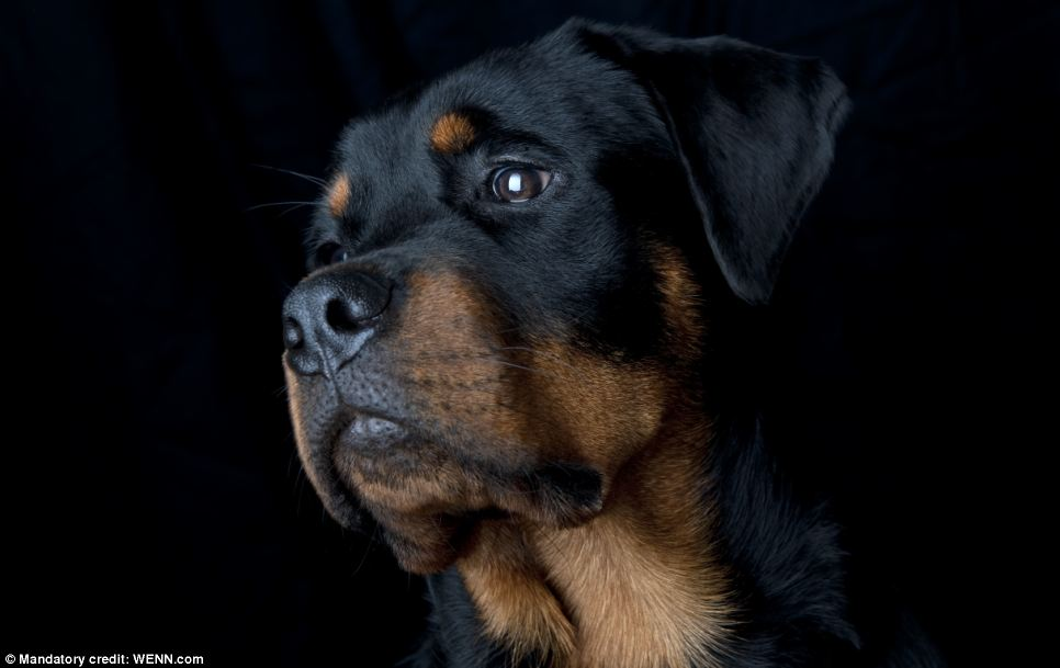 Intense? Sure I can do intense: Second place runner-up in the Dog Portrait category. Photo taken by Jason Banbury