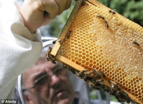 Confusion: Since August, beekeepers around the town of Ribeauville in the region of Alsace have seen bees returning to their hives carrying unidentified colourful substances that have turned their honey unnatural shades