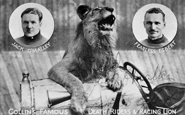 'Death riders and racing lion': A signed photograph of a lion and the courageous riders