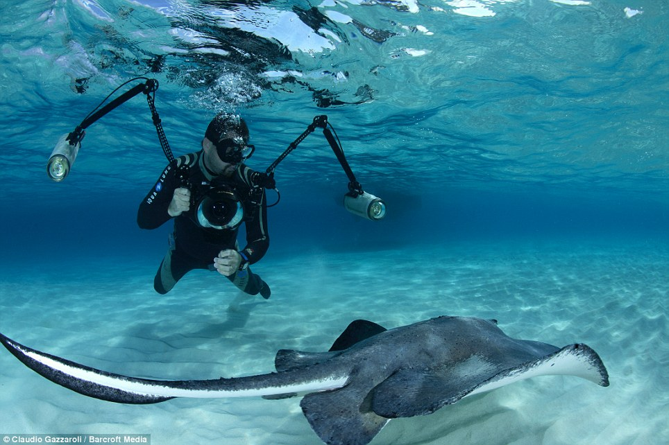 Swim time: Like sharks, they use sensors called ampullae of Lorenzini, which allow them to hunt prey by detecting their natural electrical pulses