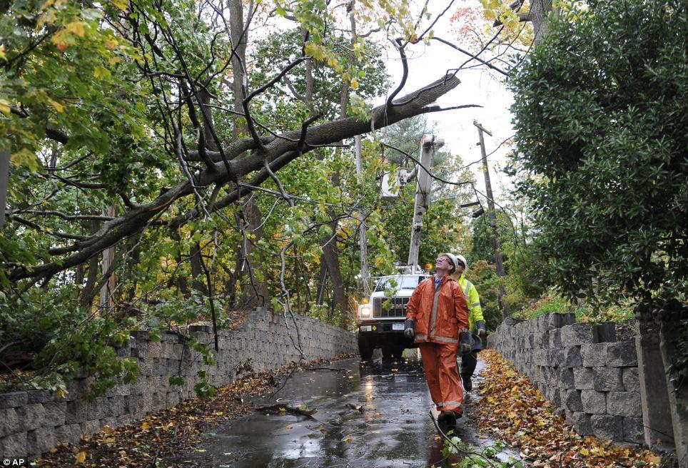 Destrucción: Long Island Power Authority personal ver una rama de un árbol caído suspendido en un cable eléctrico que cayó a consecuencia de los fuertes vientos