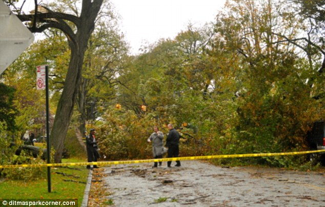 Shockwaves: Scene of the tree fall in Ditmas Park that killed dog walkers Ms Streich-Kest and Mr Vogelman