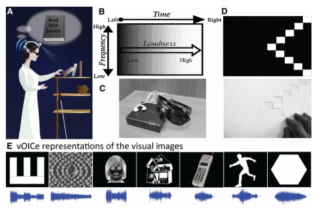 Researchers first taught people to perceive simple dots and lines. Then those individuals learned to connect the lines with junctions or curves, gradually working up to more and more complex images, pictured