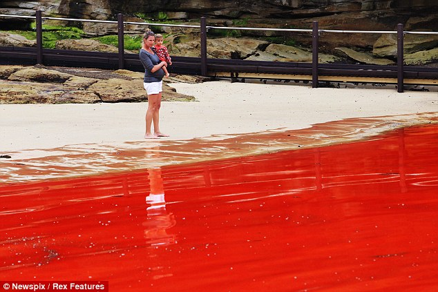 A mother and her child look out over the 'Red Sea' of Sydney's Clovelly beach. Despite health warnings a number of defiant swimmers were seen venturing into the water