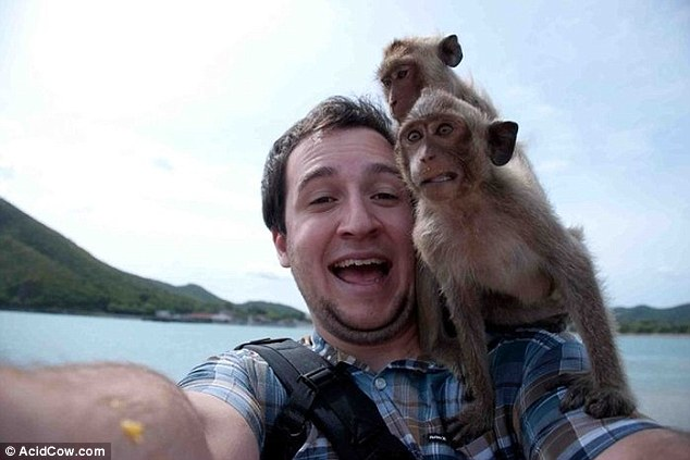 This man appears quite calm about having a pair of manic monkeys on his shoulder, the monkeys however are not so relaxed