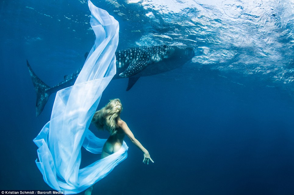 whale shark, fashion, photoshoot