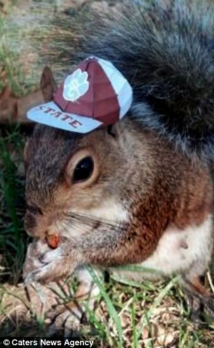 Happy Squirrel Eats Popcorn