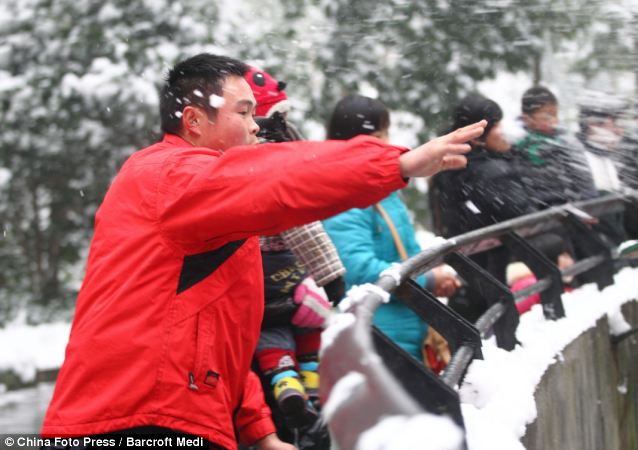Tourists throw snowballs at lions at Hangzhou Zoo on January 5