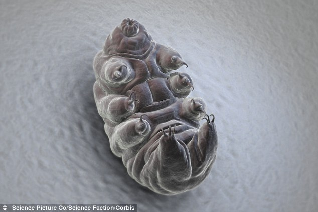 Water Bear's can surivive 5,700 grays of radiation, when 10-20 grays would kill humans and most other animals