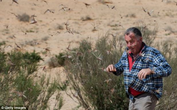 Panic: An Israeli man runs through the plague in Kmehin, Israel, earlier today
