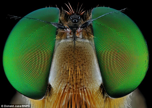 The insects aren't shy as they stand still to allow the photographer to capture their intricate detail