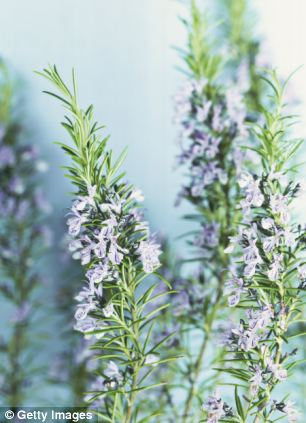 Research has found the essential oil from rosemary helps long-term memory