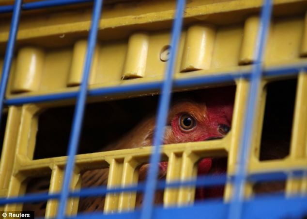 A chicken is seen inside a cage on a truck from mainland China at a border checkpoint in Hong Kong
