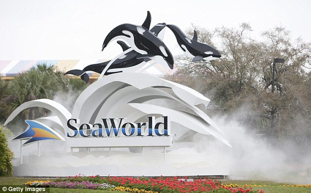 Grisly accident: Dawn Brancheau was killed in front of horrified tourists during a show at SeaWorld in Orlando, Florida