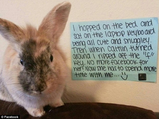 First There Was Dogshaming Now Bunny Shaming Takes Web