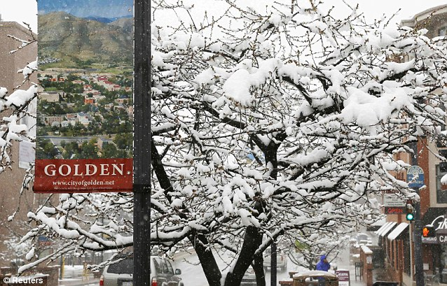 Not so Golden: Trees that would normally be blooming in the green leaves of spring are instead covered with fresh snow in downtown Golden, Colorado