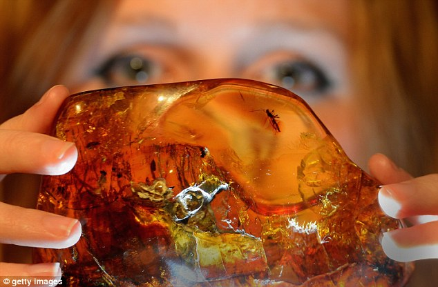 Honey hue: Esme Haigh from National Museum Scotland holds a 15-20million year old piece of Mexican amber with a wasp