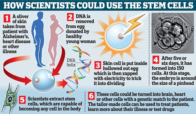 How scientists could use the stem cells