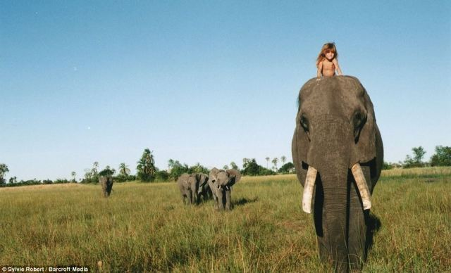 Follow me: Tippi riding on Abu's neck as he leads his herd in Okavango Swamps, Botswana