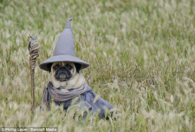 PUGS IN THE HOBBIT?