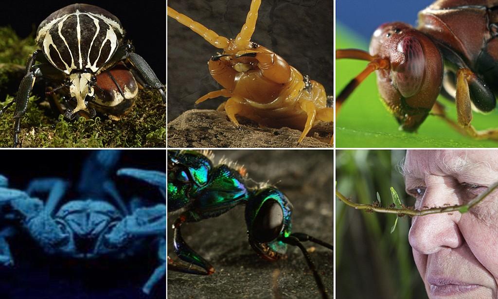 Tramp Ants Australia