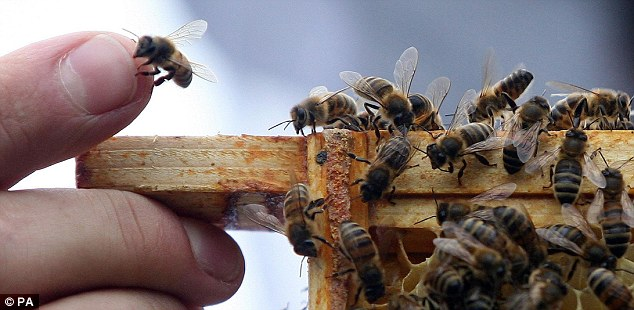 Important players: They may have nasty stingers, but bees are essential to the human diet - as well as the economic well-bring of the U.S. agricultural system