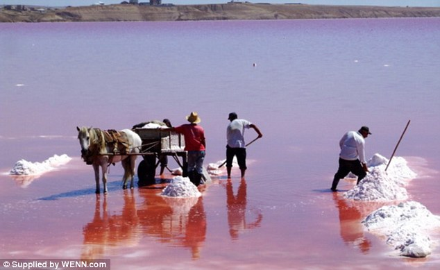 Many countries from around the world have pink lakes, including Senegal, Canada, Spain, Australia and Azerbaijan