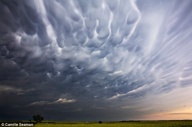Texture: Bubbling purple clouds swell in the sky during storm season
