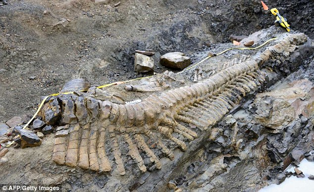 Relic: The researchers found the ancient dinosaur tail in Coahuila State in Mexico
