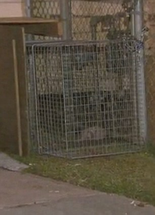 Trap: Animal control officers are visiting a trap baited with food five times a day to catch the strays