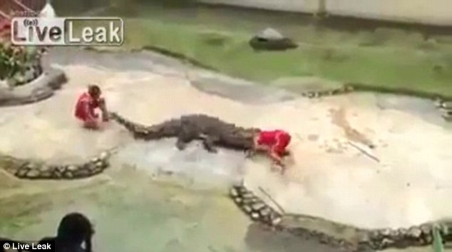 Hairy moment: Tourists watched in horror as the crocodile snapped its jaws shut while the man's head was inside in Thailand