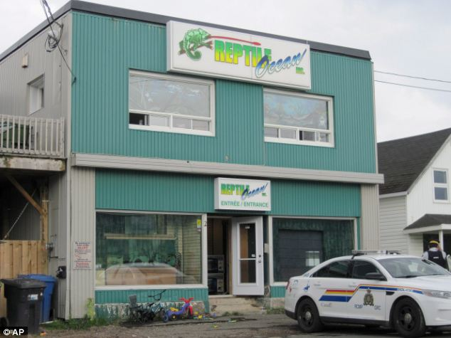 Horror: The snake escaped from Reptile Ocean, a pet shop in the small city of Campbellton, New Brunswick. It crawled into an apartment above the store