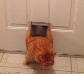 """Résultat de recherche d'images pour """"fat cat door"""""""