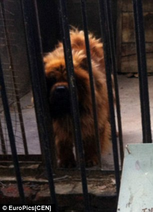 Visitors said they felt defrauded by paying to see an African lion (right) and being shown a dog (left)