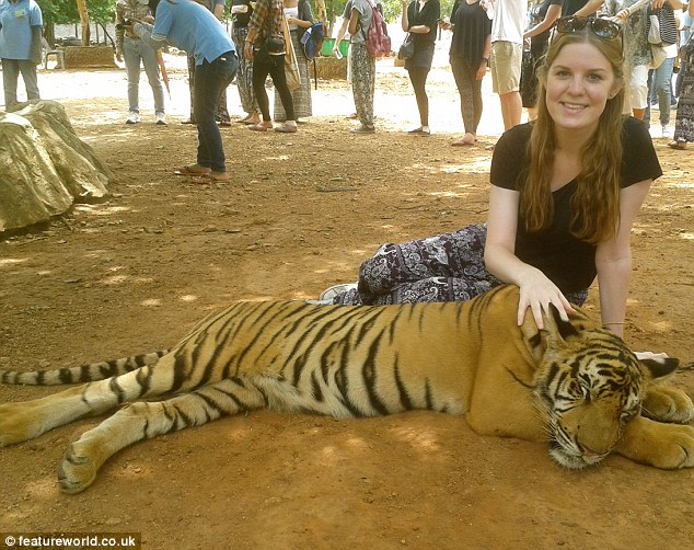 Calm before the storm: Isabelle Brennan, pictured stroking a tiger - she would later be attacked by one of the big cats