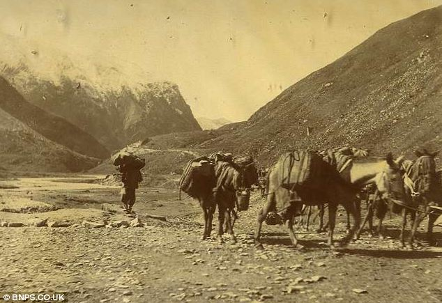 Views: A convoy of mules stand at the base of snowy mountains near to ...
